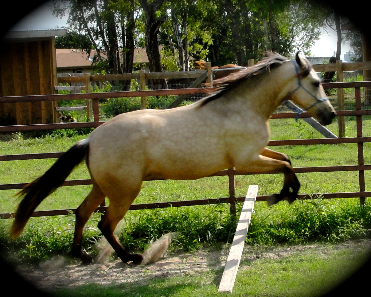 Destiny having fun as a youngster in TX
